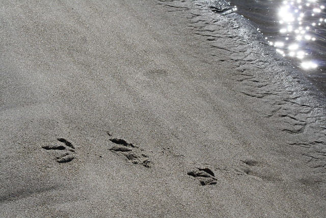 Fun Footprints