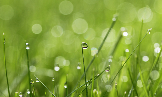 """Morning dew"""