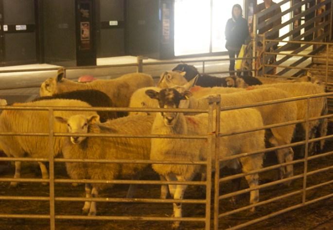 wool week 2013 harvey nichols