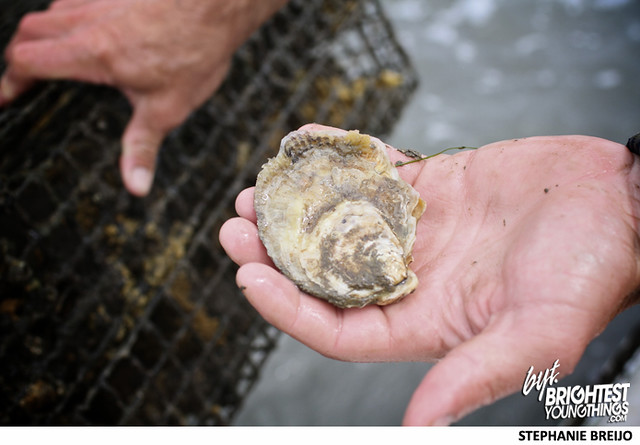Rappahannock Regional Oysters VA Photos Brightest Young Things8
