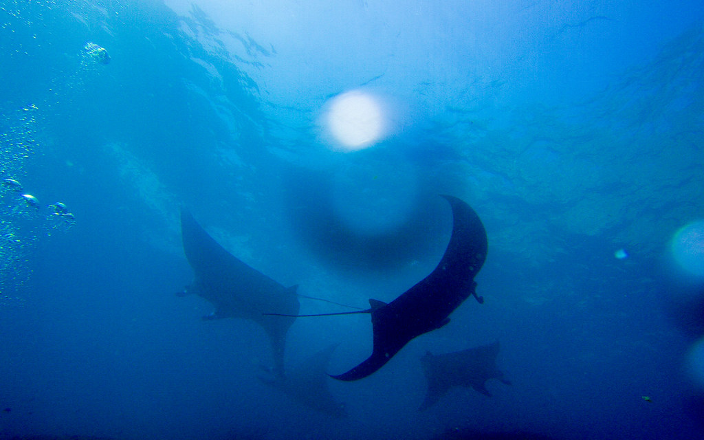 Manta Point, Manta Ray, Bali, Indonesia, Scuba Diving