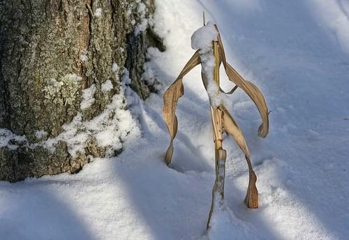 Wintertime Stroll