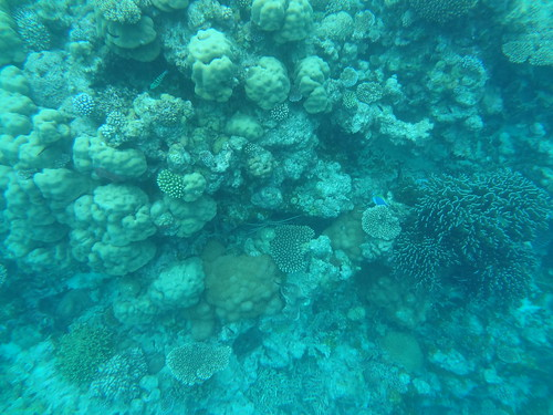 Underwater photo of coral reef and a lobster