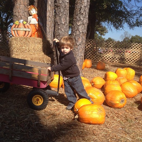 He didn't care which pumpkin we picked, as long as he got to pull it in the wagon!