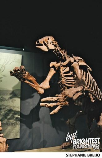 Smithsonian Dinosaur Exhibit Photos Brightest Young Things Stephanie Breijo41