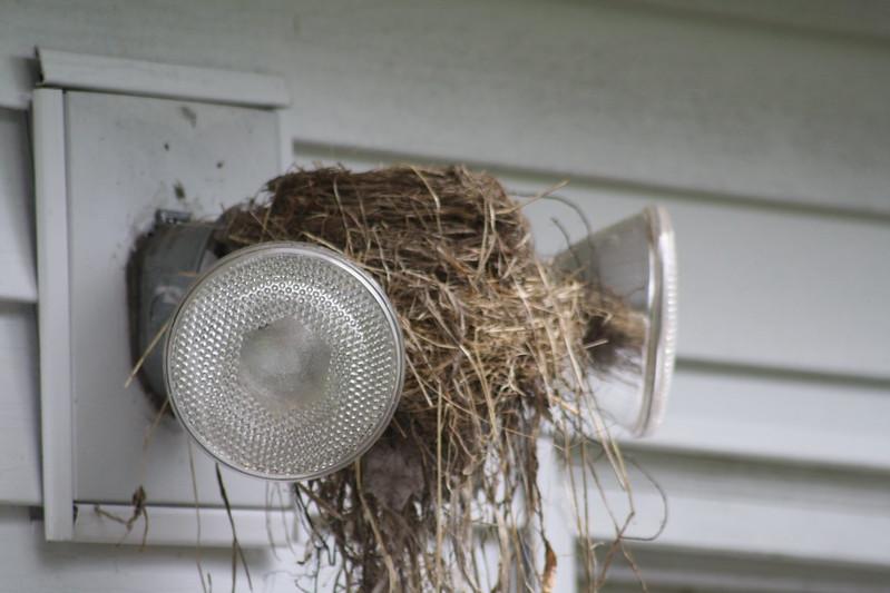 robin's nest on floodlights