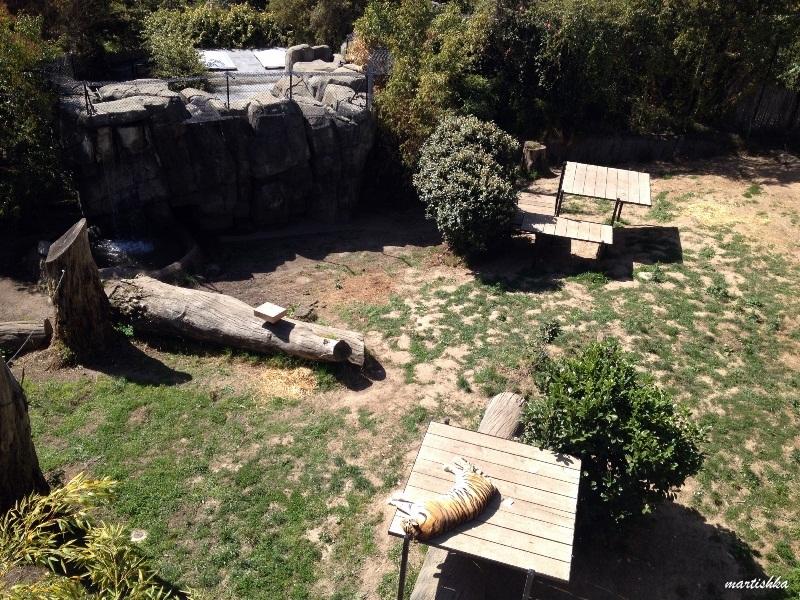 Oakland Zoo (35)