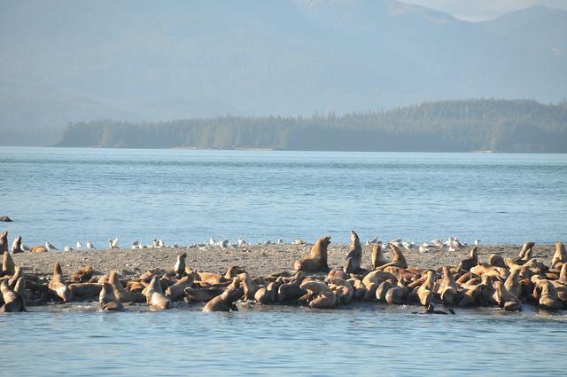 Alaska Trip-289