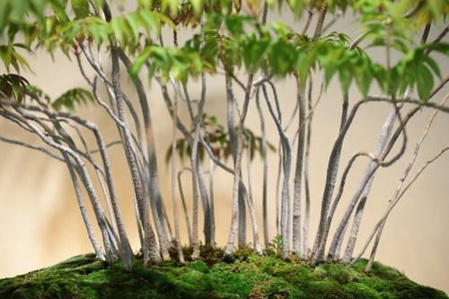 「大宮盆栽×タムロン」大宮盆栽美術館で盆栽撮影にチャレンジ!ブロガーイベント