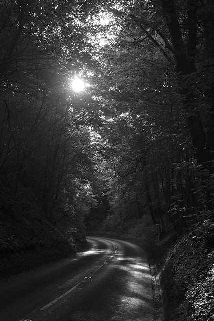 The Light Through the Trees, in Black and White