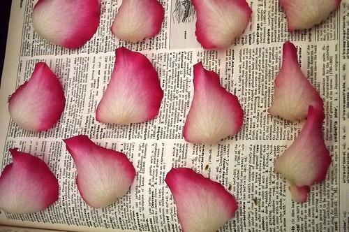 Pressed flowers: Anniversary bouquet 3