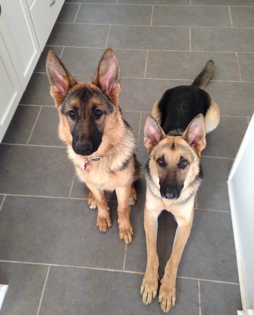 My watchful girls