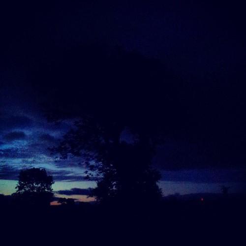 Dawn tree 1