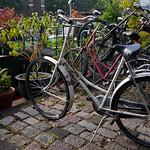 Viajefilos en Holanda, Amsterdam 03