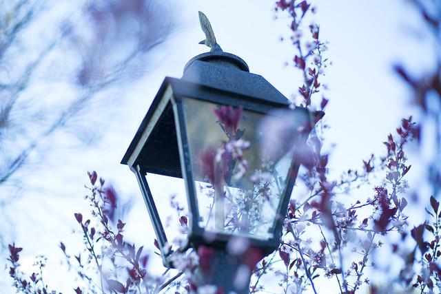 Lamp Post 1