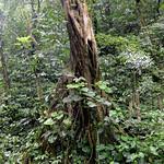 09 Viajefilos en Panama, Valle de Anton 12