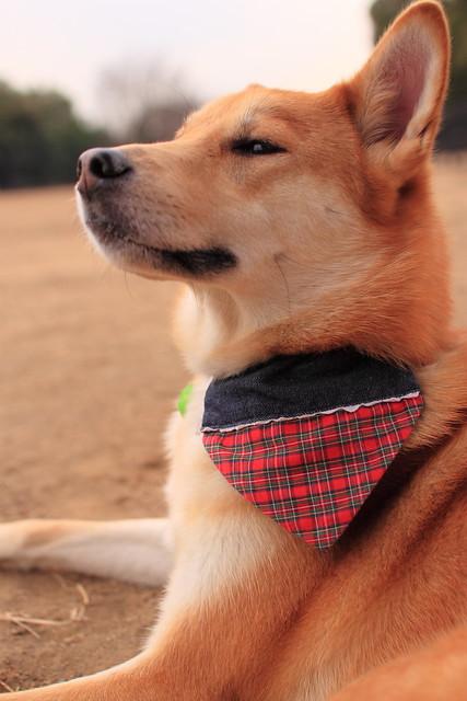01_14_dog_run_0031