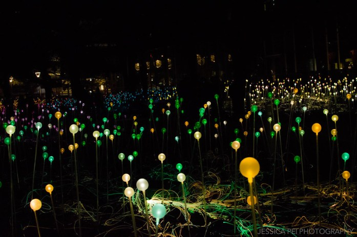 Field of Light by Bruce Munro in Discovery Green Houston