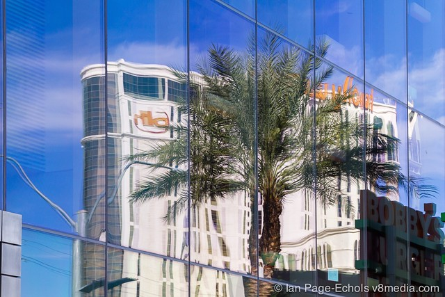 Reflection of Palm Tree