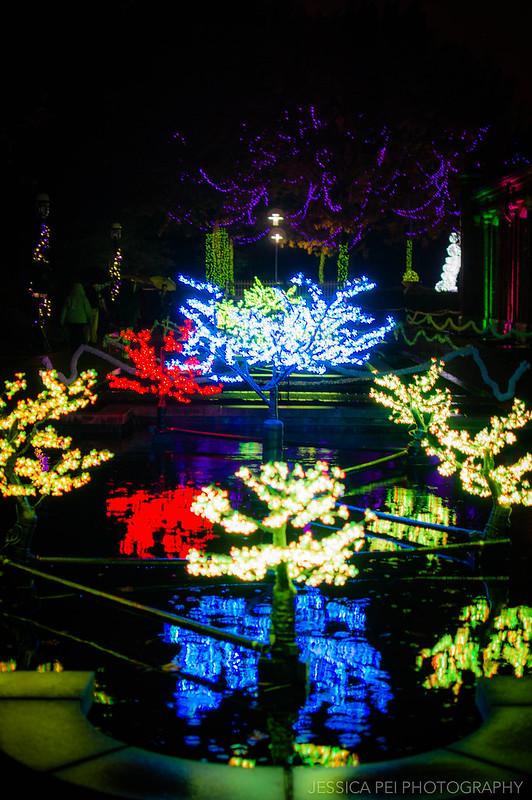 Tree Lights on Pond in Garden Glow St. Louis