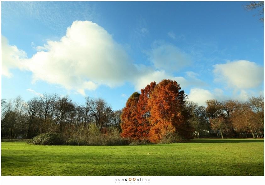 De schuine bomen bij gebruik van een 17mm brandpunt op een full frame