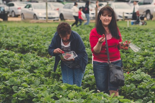 Bacchus Marsh Strawberry & Cherry Festival