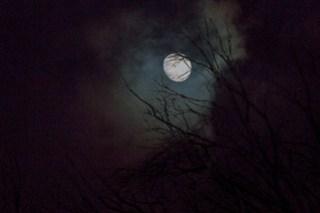 Mond-Bäume