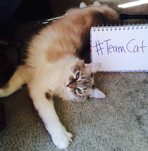 teamcat