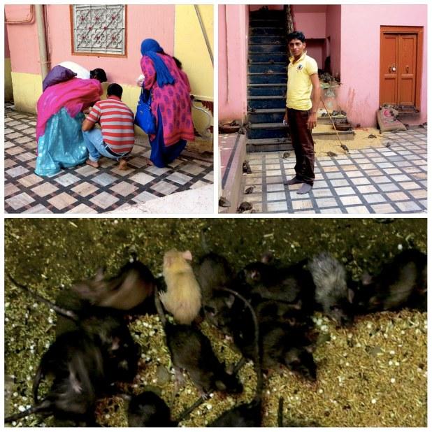 Templo de las ratas India