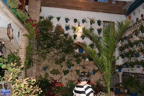San Lorenzo Flores en los Patios de Córdoba