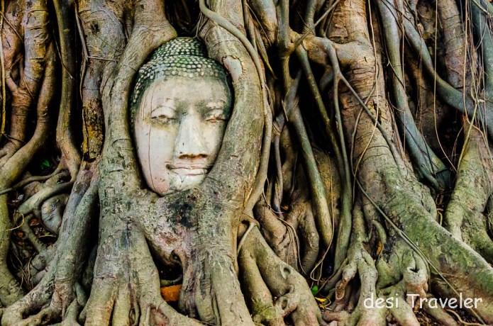 Buddha Head Tree Roots Thailand