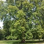 Viajefilos en Londres, parques 10