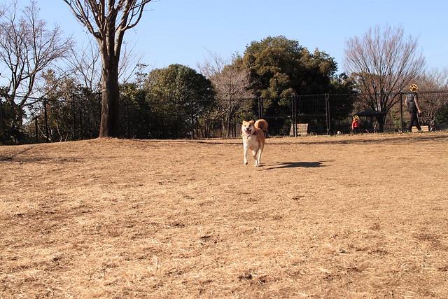 01_14_dog_run_0006