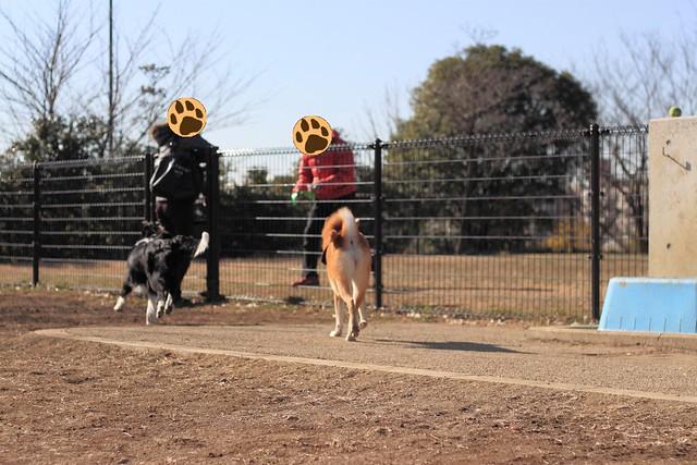 01_14_dog_run_0008