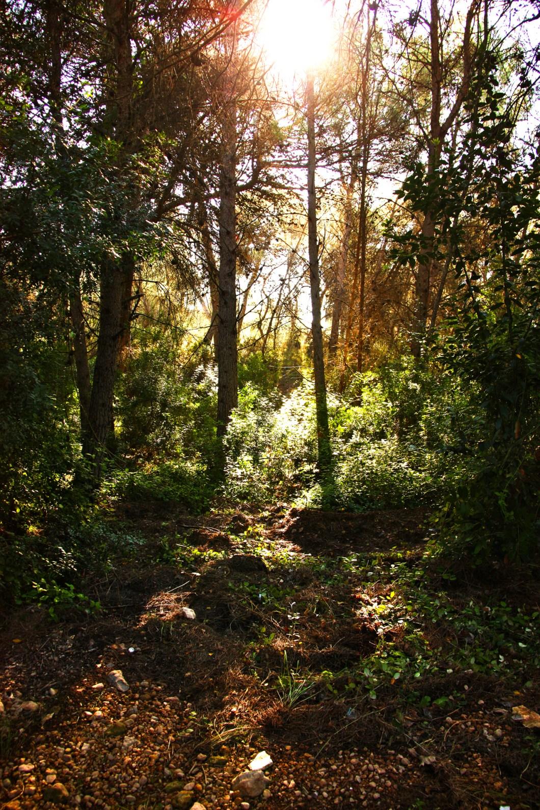 Imagen gratis de un árboles de un bosque con el sol de fondo