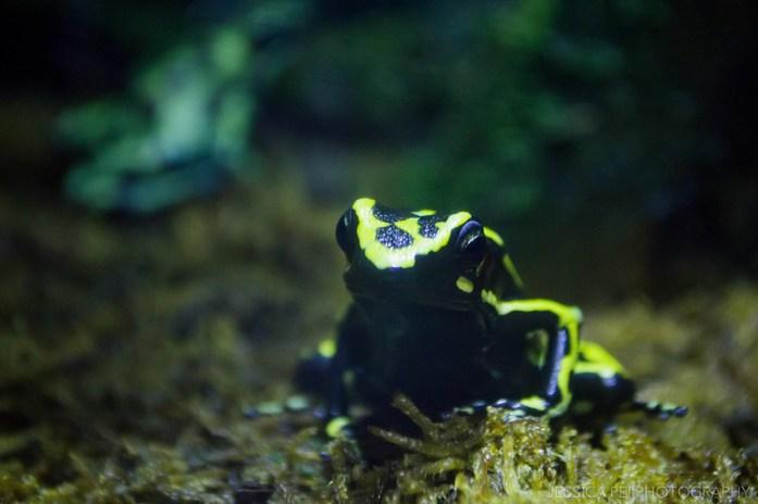 Poison Frog Sea World San Antonio