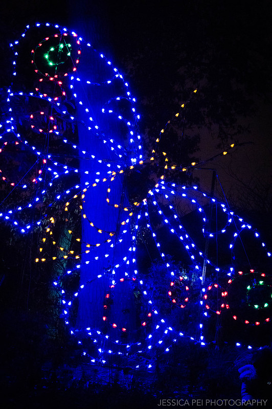 Butterfly Christmas Display at St. Louis Zoo Wild Lights