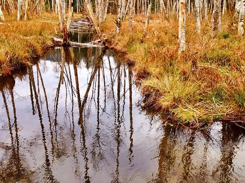 Near the beaver dam