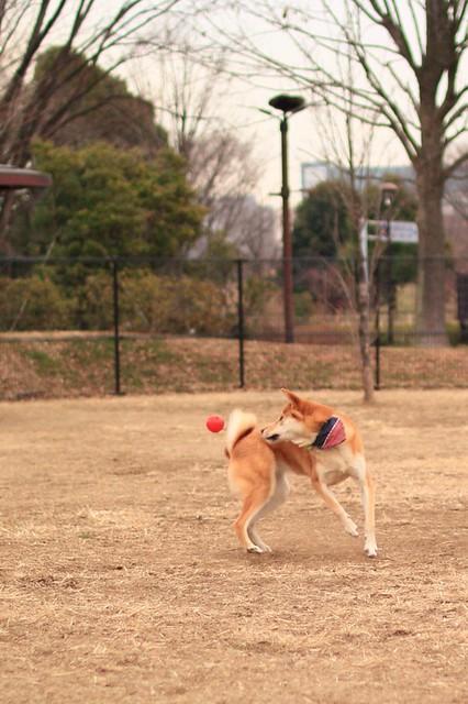 01_14_dog_run_0034
