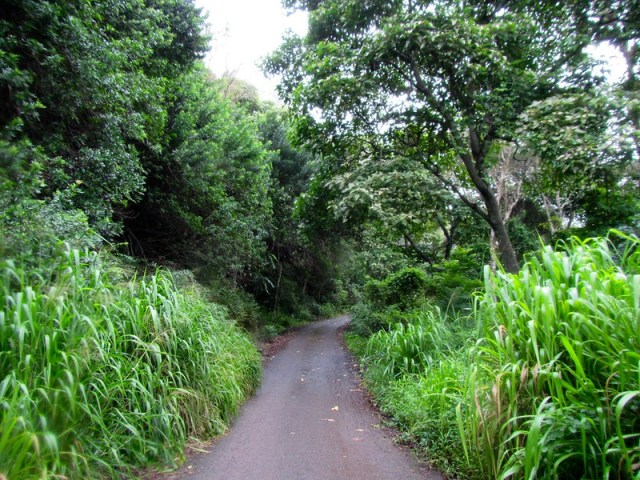 Picture from Moku'leia Access Road