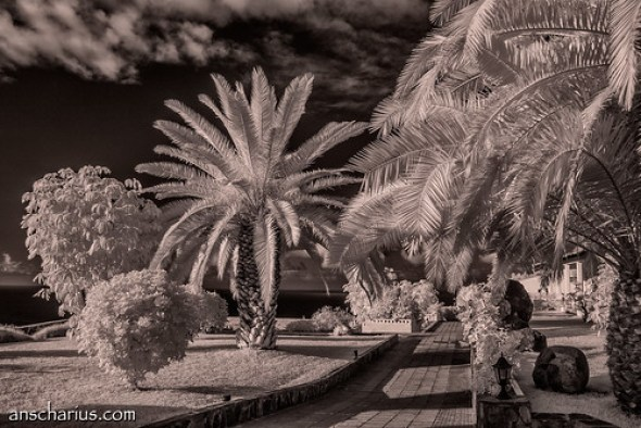 Finca San Juan #2 - Nikon 1 V1 Infrared 700nm & 10-100mm CX Lens