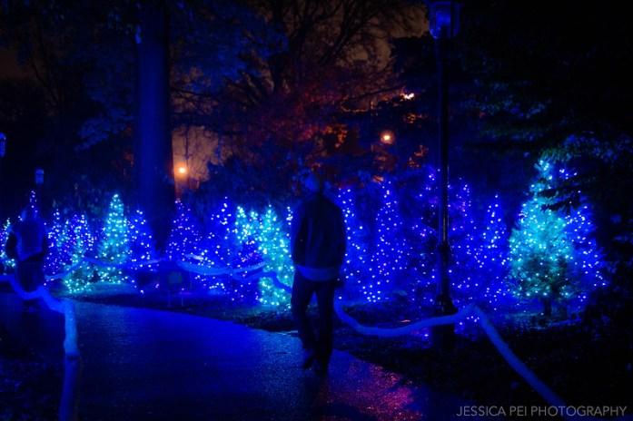 Blue Christmas Trees in Garden Glow St. Louis