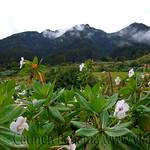 01 Viajfilos en Panama. Sendero Quetzal 08