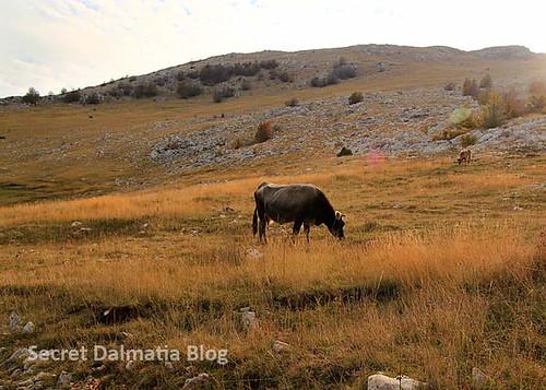 Picturesque pastures of Svilaja
