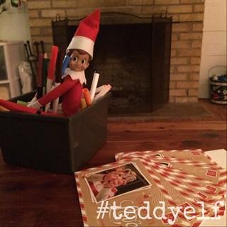 Teddy Cards