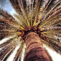 palmtree glenelg promenade