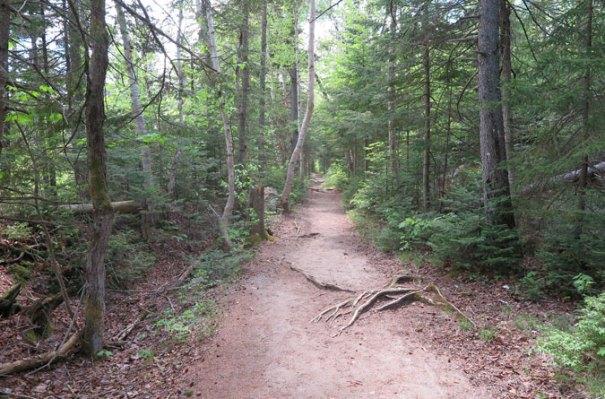 Zealand Trail