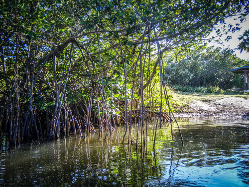 Indian River Paddling-38
