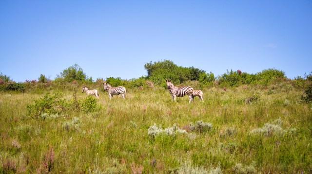 20140221-Etelä-Afrikka 2014 184