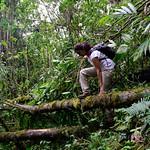 01 Viajfilos en Panama. Sendero Quetzal 52